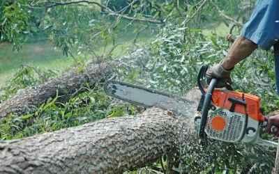 Спил деревьев Распил дров.Скос травы - Благовещенск, цены, предложения специалистов