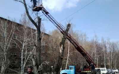 Спил деревьев любой сложности - Благовещенск, цены, предложения специалистов