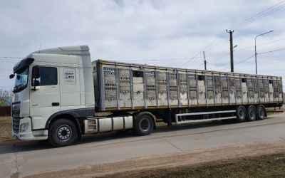 Перевозка животных и скота 8-965-920-08-80 - Благовещенск, цены, предложения специалистов