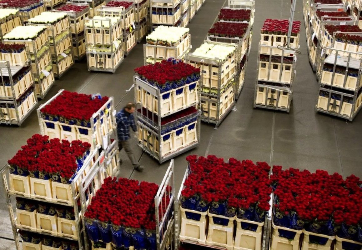 Прием заявок на перевозку цветов. Диспетчерская - Благовещенск, цены, предложения специалистов