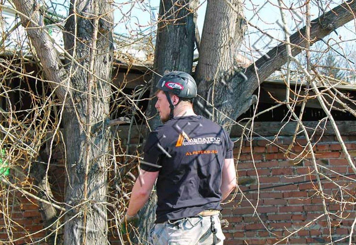 Спил и вырубка деревьев професионалами - Благовещенск, цены, предложения специалистов